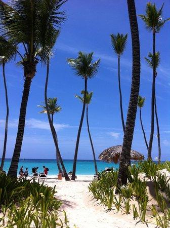 Grand Palladium Punta Cana Resort & Spa : beach hotel