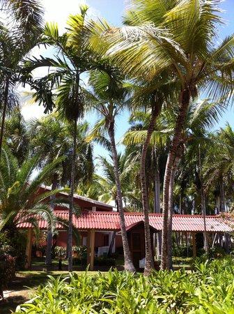 Grand Palladium Punta Cana Resort & Spa : outside the room