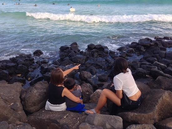 Marriott's Waiohai Beach Club : We saw so many sea turtles.
