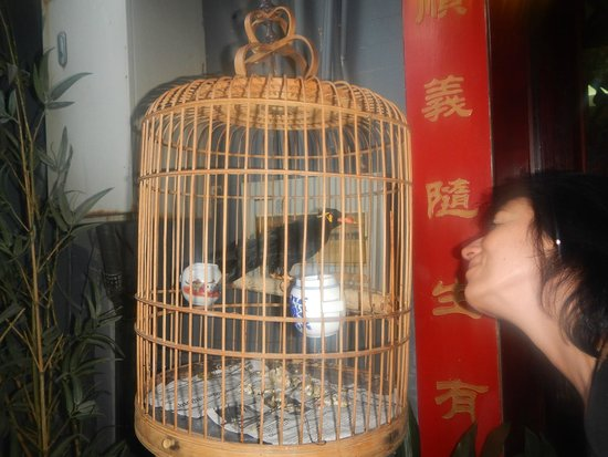Double Happiness Beijing Courtyard Hotel: Speaking Mynah Bird at the entrance