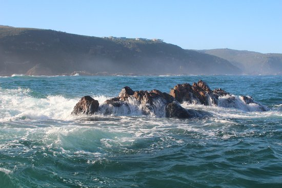 Knysna RIB Adventures: Out in the sea