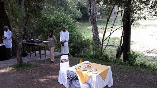 Sarova Mara Game Camp: breakfast at salt lick