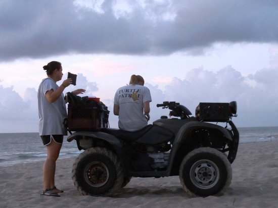 Fort Lauderdale Beach : Turtle Patrol checks every morning for new sea turtle nests during the summer