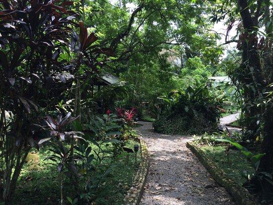 The Lodge and Spa at Pico Bonito: территория