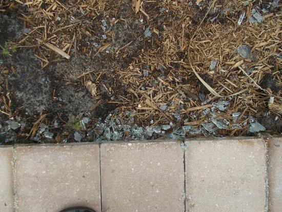 Allure Resort International Drive Orlando: Broken glass around tree in pool area