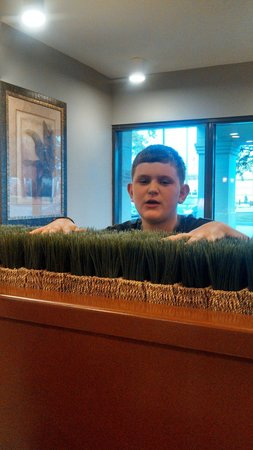 """Quality Inn - US65 & East Battlefield Rd.: Quality inns """"lobby grass"""". Is nice and fluffy....thanks for the stay......."""