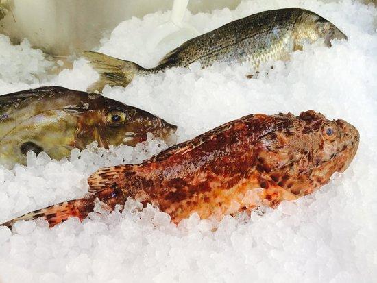 Restaurant Tri Ferala: Fresh fish