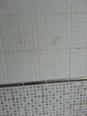 South Park Cottage Apartment: More dirty tiles