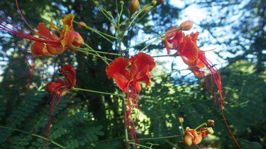 Le Jardin Maore: Flore