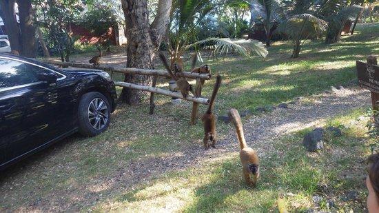 Le Jardin Maore: Makis / Parking