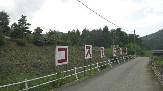 Toyono Cosmos Flower Field