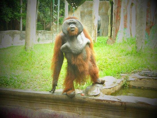 Bali Zoo : 女性がカメラを向けると目線とポーズをくれるかわいいオランウータン。