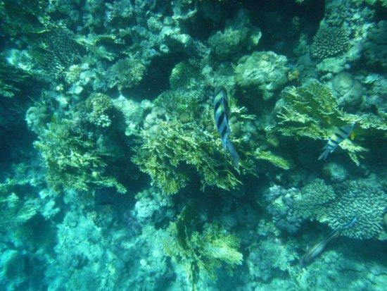 Xperience Sea Breeze Resort: Fire coral - beware!
