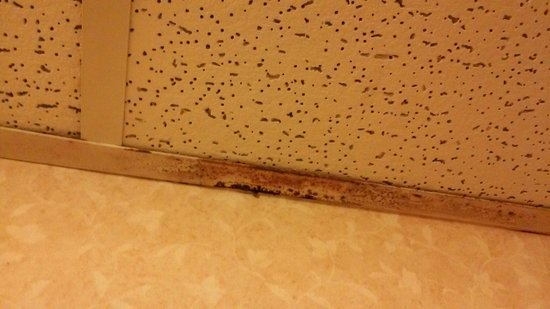 Days Inn & Suites Plattsburgh: Bathroom yuck
