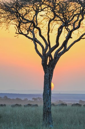 East Africa Adventure Tours and Safaris - Day Tours: sunset