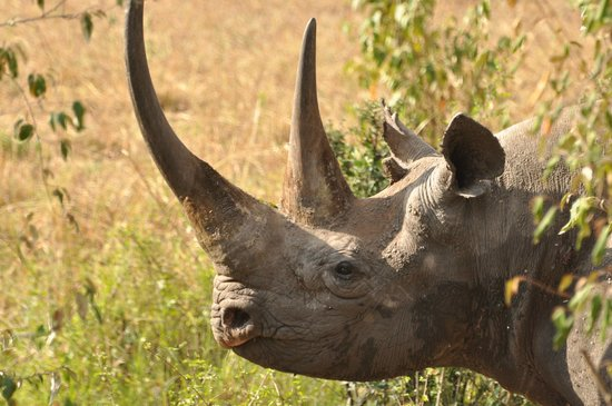 East Africa Adventure Tours and Safaris - Day Tours: rhino