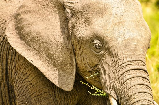 East Africa Adventure Tours and Safaris - Day Tours: elephant