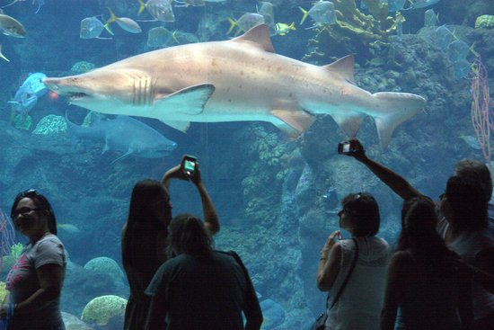 The Florida Aquarium: Watching the sharks swim by
