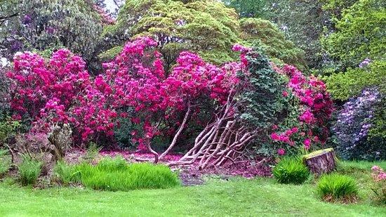Muncaster Castle: Gardens