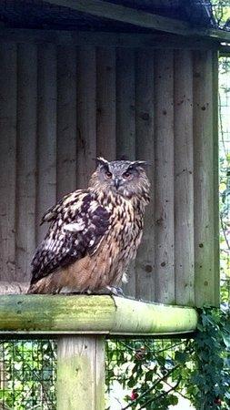 Muncaster Castle: Owl Sanctuary