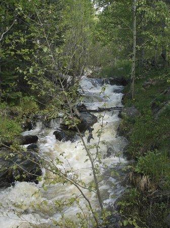 Wild Basin Area: Wild Basin upper and lower falls through the aspens
