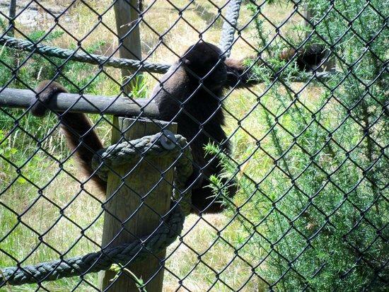 Monkey World: monkey