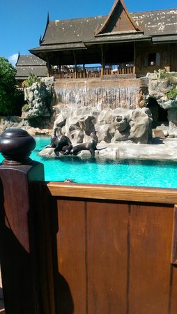 Siam Park: Sea lions as you entre