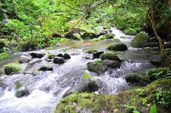 Pinaisara Falls : ここから歩きです。