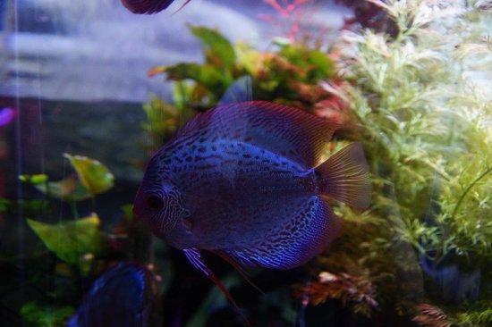 Dubai Aquarium & Underwater Zoo: Dubai aquairum and underwater zoo