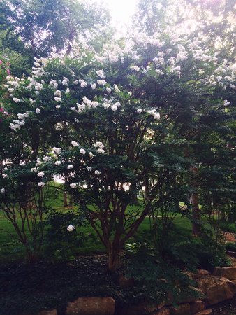 DoubleTree by Hilton Hotel Tulsa - Warren Place : Beautiful crape myrtle trees
