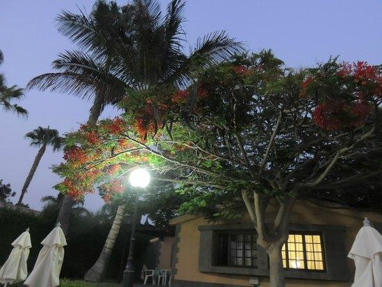 Dunas Maspalomas Resort: végétation chambre 4139