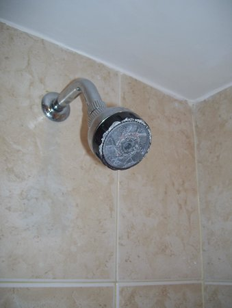 Radisson Hotel Colonia del Sacramento: shower head needs decalcifying