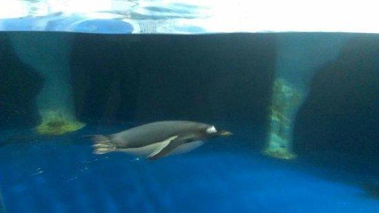 Dingle Oceanworld: Hey! Look @ Me