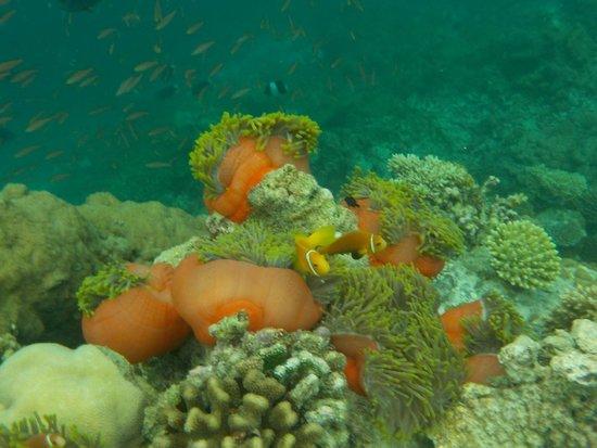 Constance Moofushi: Underwater wonders