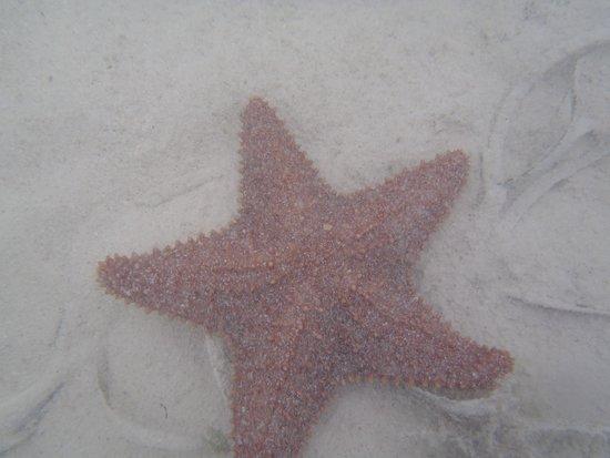 Tahiti Beach: sea star