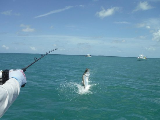 Seize the Day Fishing Charters: Tarpon Fishing with Captain Paul