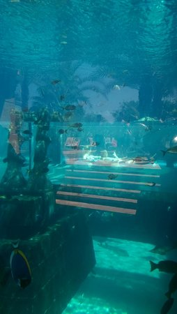 Aquaventure Waterpark: slides