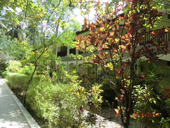 Biyadhoo Island Resort: LES BATIMENTS DES CHAMBRES