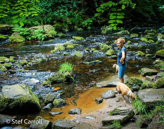 Hardcastle Crags: My Wife with our dogs loving the walk.