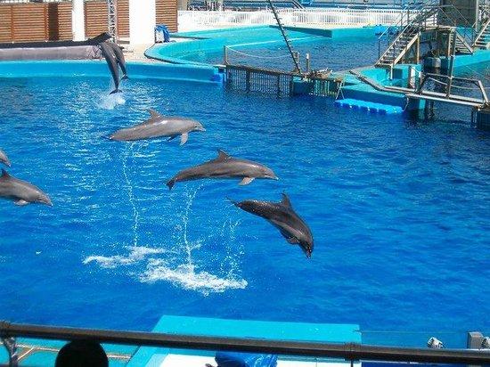 Oceanografic: espectáculo delfines