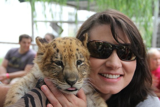 Greater Wynnewood Exotic Animal Park: Holding the baby liliger
