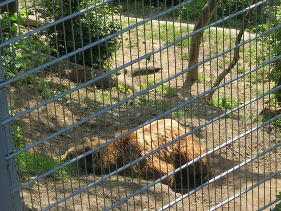 Bärenpark: a bear in the bear park