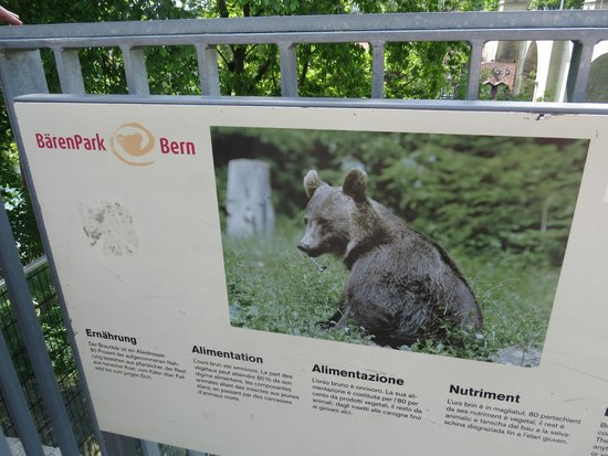 Bärenpark: the barenpark