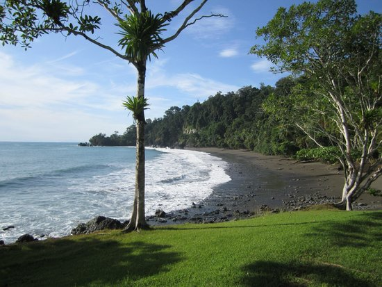Casa Corcovado Jungle Lodge: Look how many people are on the beach!  (hint: it's zero)