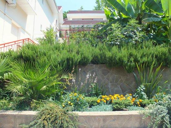 Villa Belveder : Вид на террасы