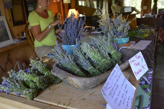 Cape Cod Lavender Farm: Dried lavender