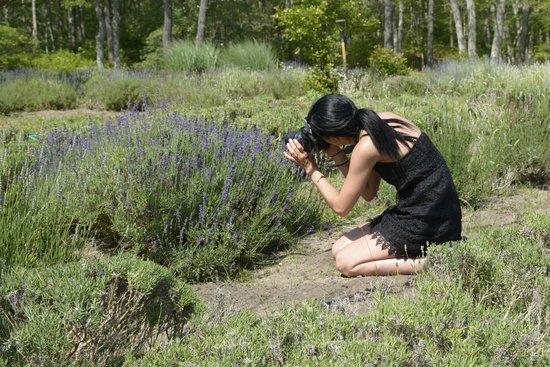 Cape Cod Lavender Farm: Great photo spot