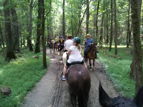 Cades Cove Riding Stables: On the trail!