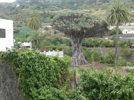 Globales Acuario: Tenerife Icod de los Vinos