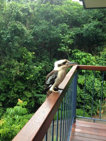 Kookas Bed & Breakfast : a beautiful kooka waiting for breakfast :)